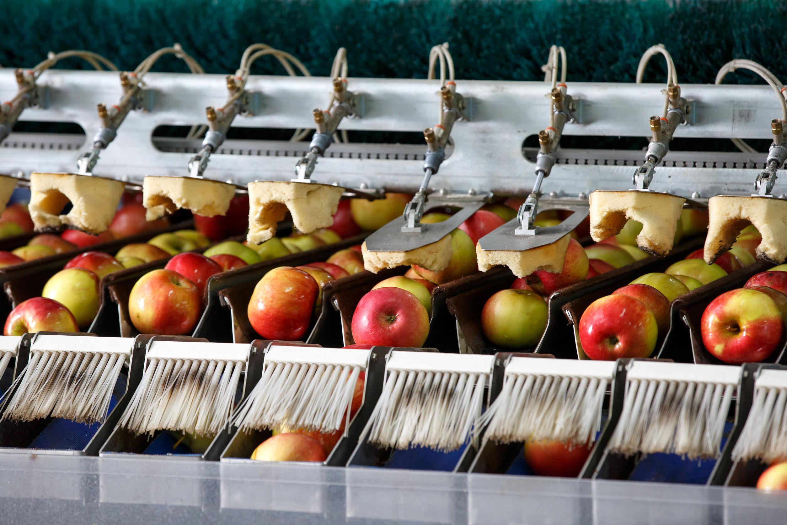 Industria alimentare come garantire massimi standard di igiene