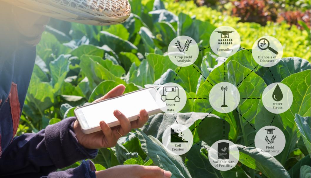 10 applicazioni IoT nel settore Food and Beverage